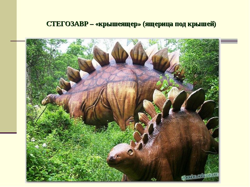 СТЕГОЗАВР – «крышеящер» (ящерица под крышей)