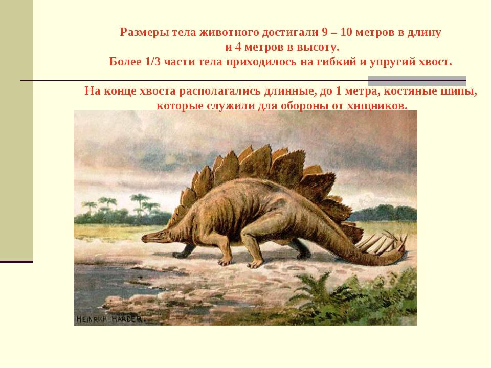 Размеры тела животного достигали 9 – 10 метров в длину и 4 метров в высоту....