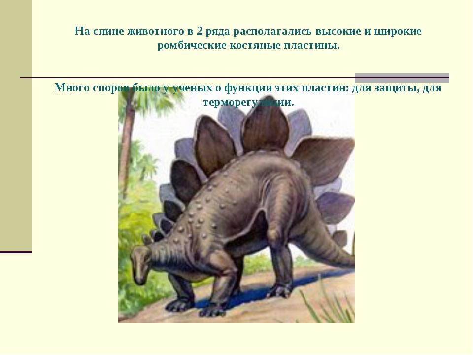 На спине животного в 2 ряда располагались высокие и широкие ромбические кост...