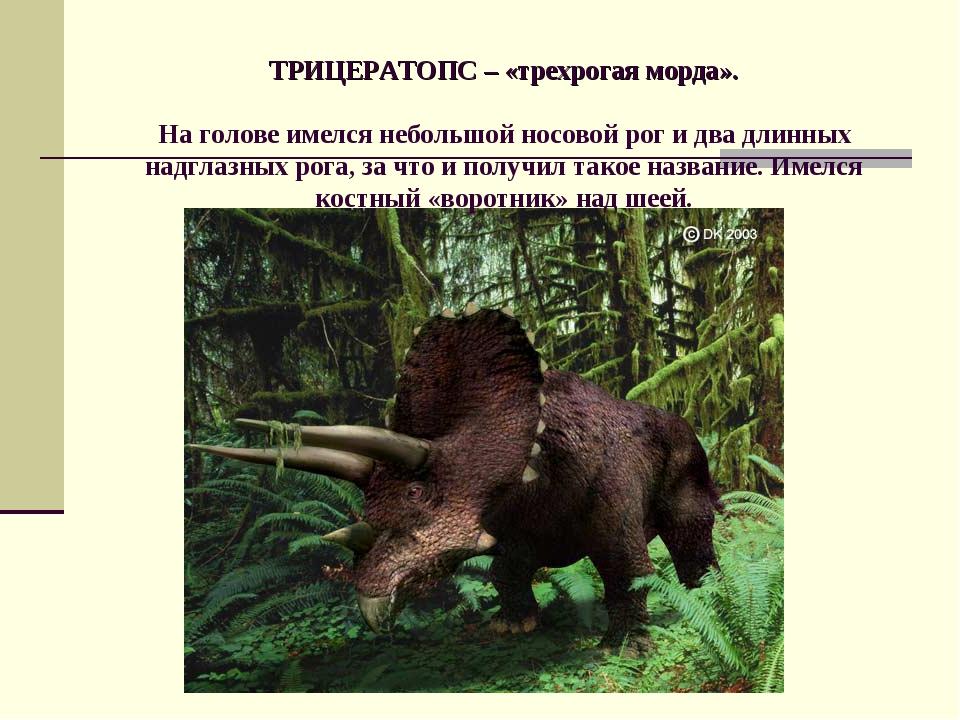 ТРИЦЕРАТОПС – «трехрогая морда». На голове имелся небольшой носовой рог и дв...