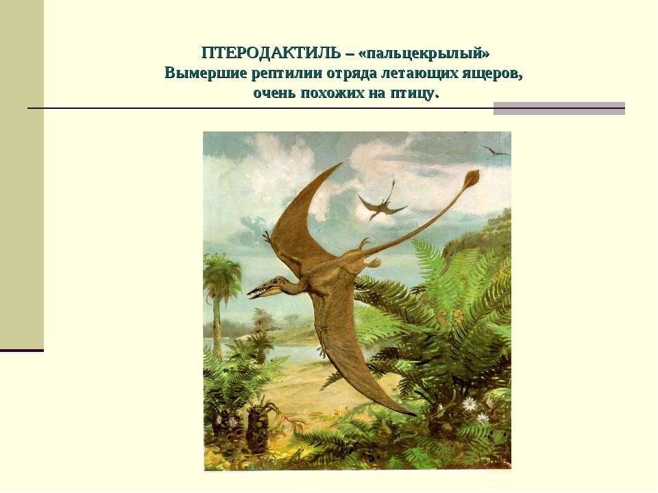 ПТЕРОДАКТИЛЬ – «пальцекрылый» Вымершие рептилии отряда летающих ящеров, очен...