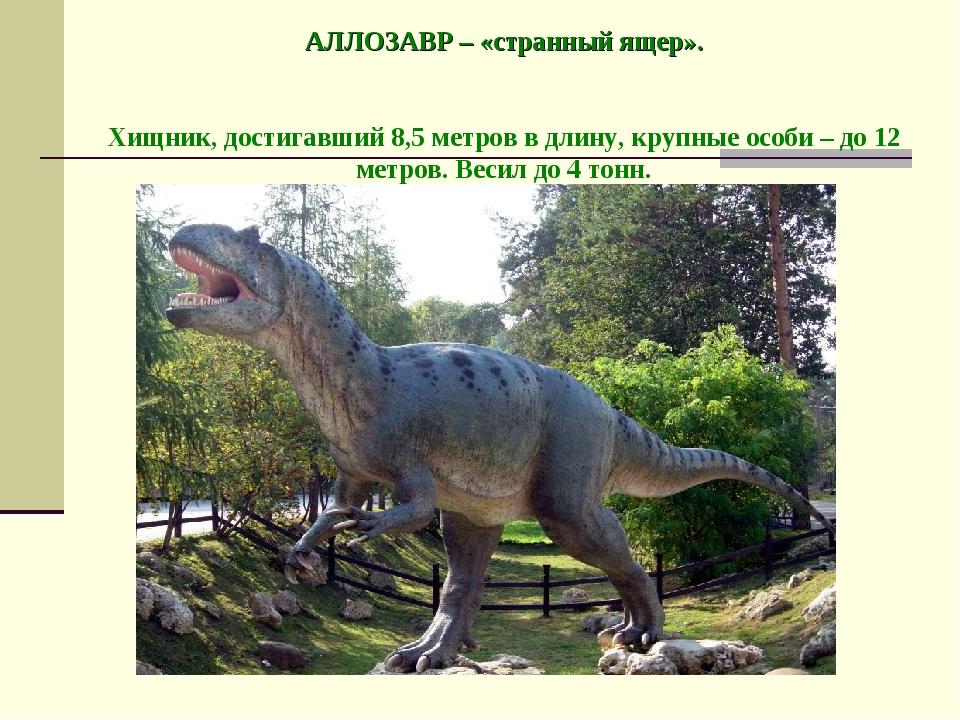 АЛЛОЗАВР – «странный ящер». Хищник, достигавший 8,5 метров в длину, крупные...