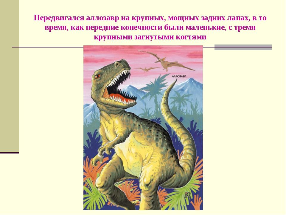Передвигался аллозавр на крупных, мощных задних лапах, в то время, как передн...