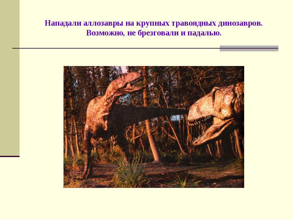 Нападали аллозавры на крупных травоядных динозавров. Возможно, не брезговали...