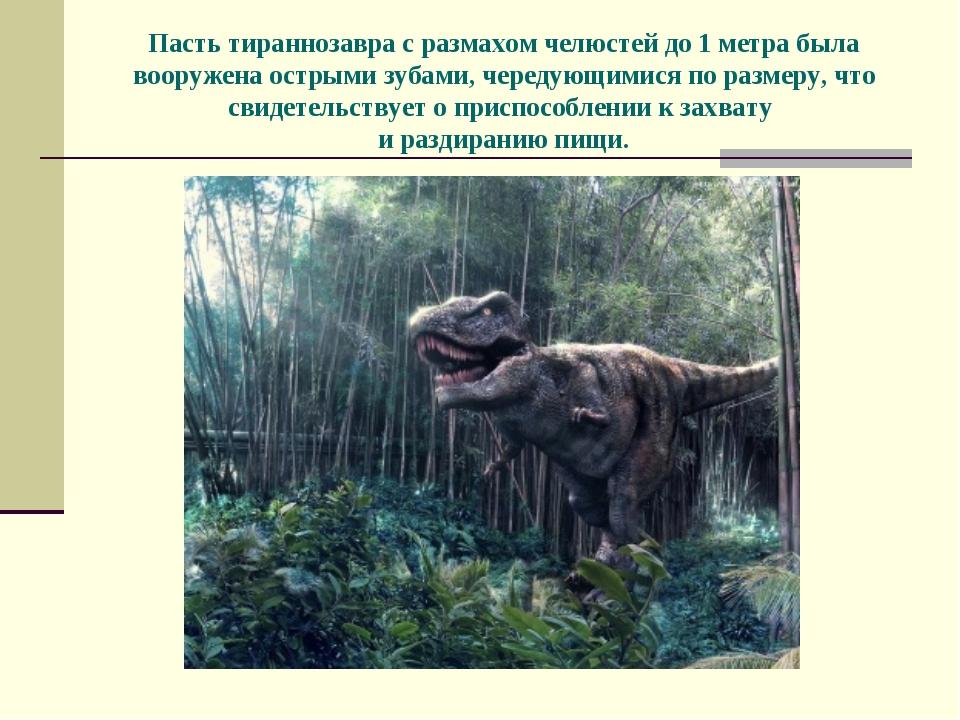 Пасть тираннозавра с размахом челюстей до 1 метра была вооружена острыми зуба...