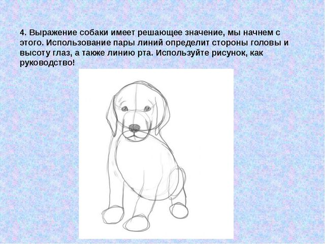 4. Выражение собаки имеет решающее значение, мы начнем с этого. Использование...