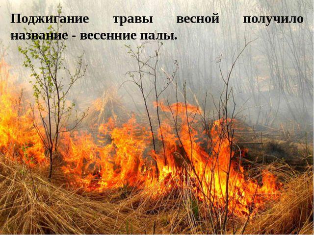 Поджигание травы весной получило название - весенние палы.