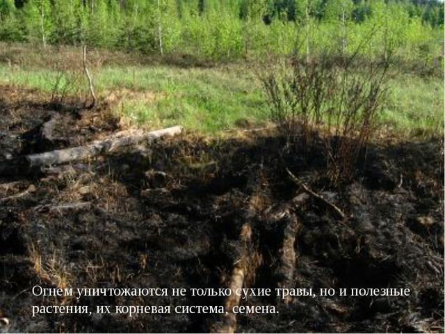 Огнем уничтожаются не только сухие травы, но и полезные растения, их корнева...