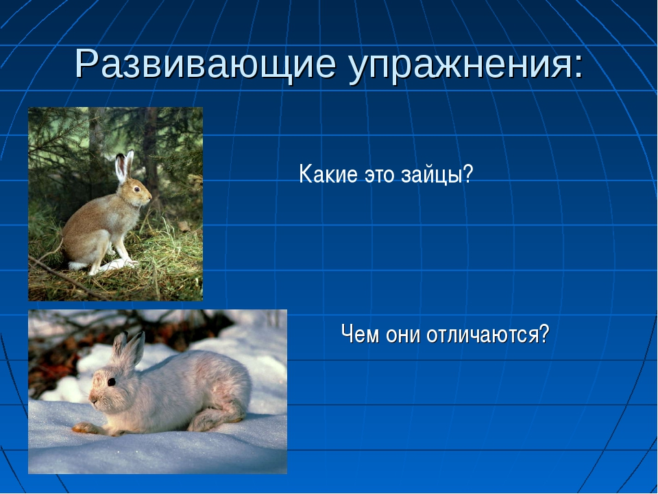 Развивающие упражнения: Чем они отличаются? Какие это зайцы?