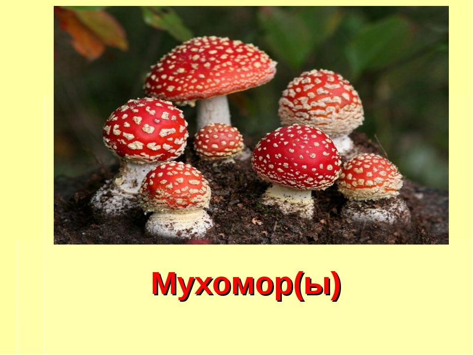 Мухомор(ы)