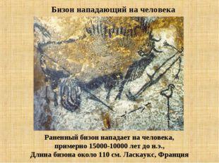 Раненный бизон нападает на человека, примерно 15000-10000 лет до н.э., Длина