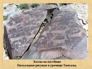Козлы на пастбище Наскальные рисунки в урочище Тамгалы.