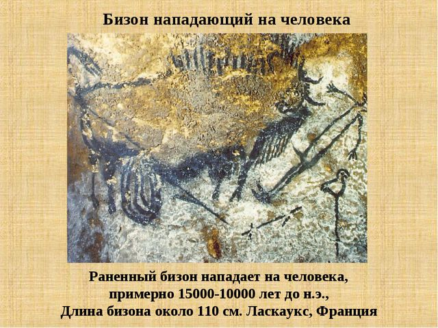 Раненный бизон нападает на человека, примерно 15000-10000 лет до н.э., Длина...
