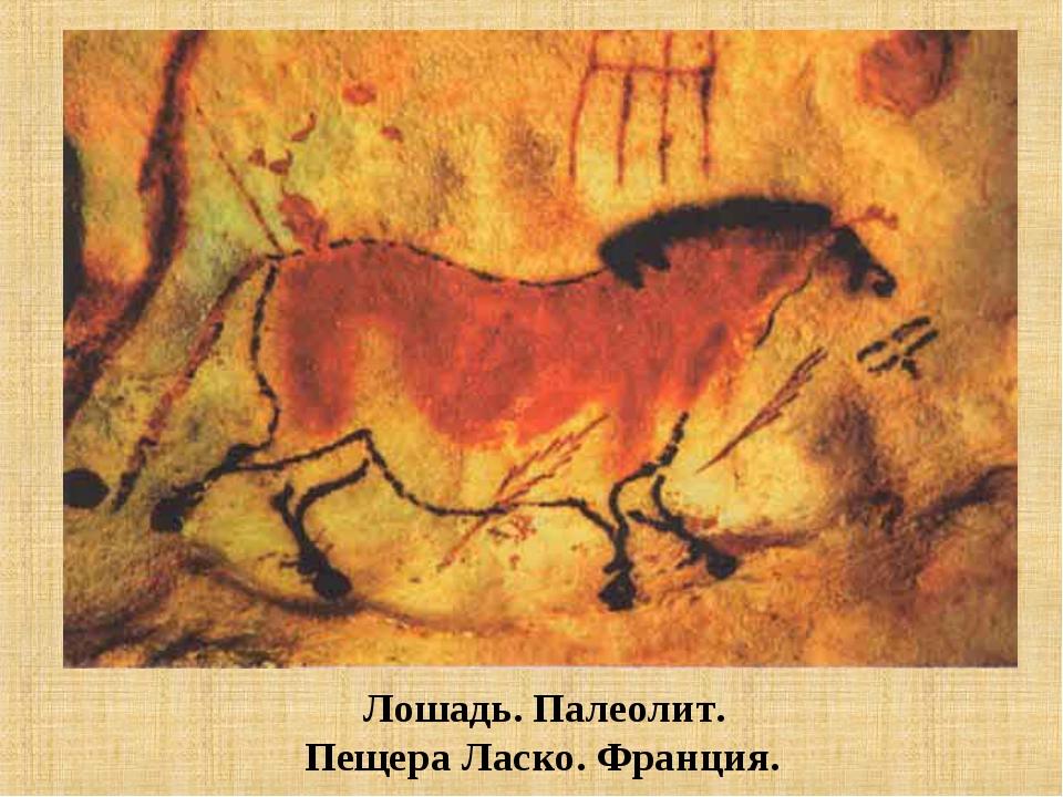 Лошадь. Палеолит. Пещера Ласко. Франция.
