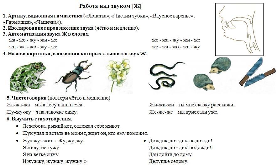 http://kokarevala.narod.ru/olderfiles/3/zvuk_zh.jpg