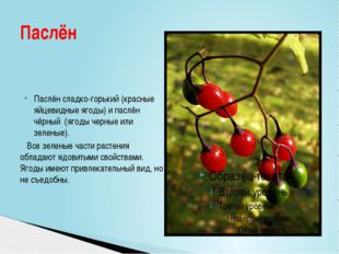 Паслён сладко-горький(красные яйцевидные ягоды) ипаслён чёрный (ягоды черн