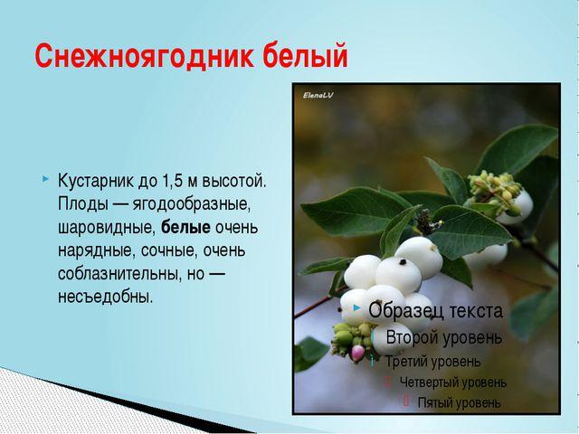 Кустарник до 1,5 м высотой. Плоды — ягодообразные, шаровидные, белые очень на...