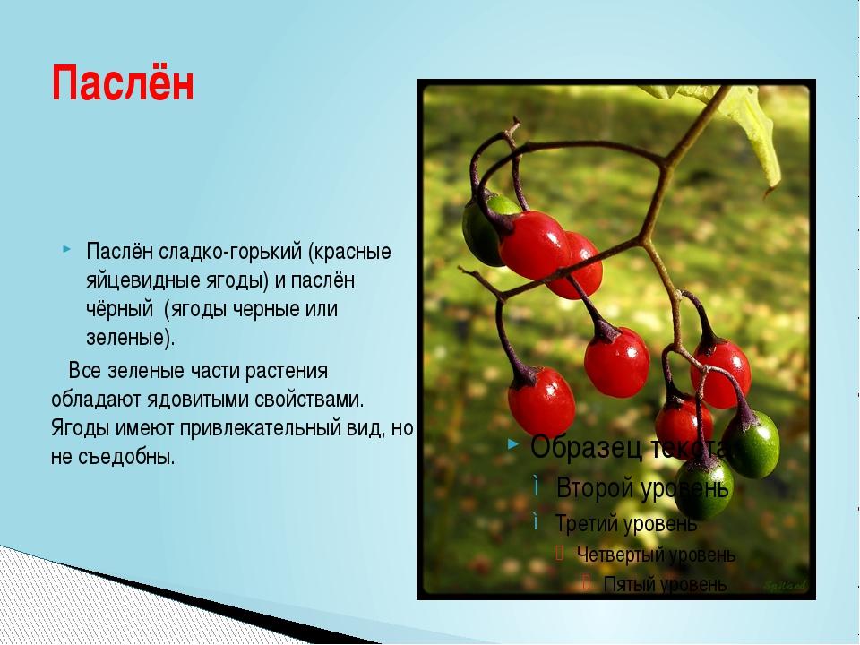 Паслён сладко-горький(красные яйцевидные ягоды) ипаслён чёрный (ягоды черн...