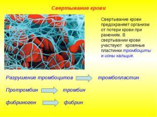 Свертывание крови Разрушение тромбоцитов тромбопластин Протромбин тромбин фиб