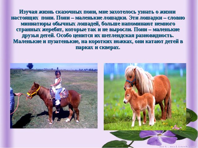 Изучая жизнь сказочных пони, мне захотелось узнать о жизни настоящих пони. По...