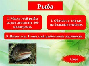 1. Масса этой рыбы может достигать 300 килограмм. 2. Обитает в омутах, на бол
