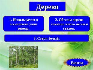 1. Используется в озеленении улиц города. 2. Об этом дереве сложено много пес