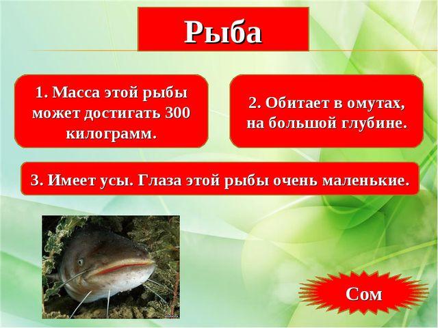 1. Масса этой рыбы может достигать 300 килограмм. 2. Обитает в омутах, на бол...