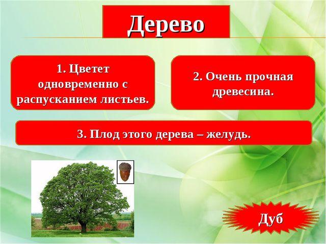 1. Цветет одновременно с распусканием листьев. 2. Очень прочная древесина. 3....