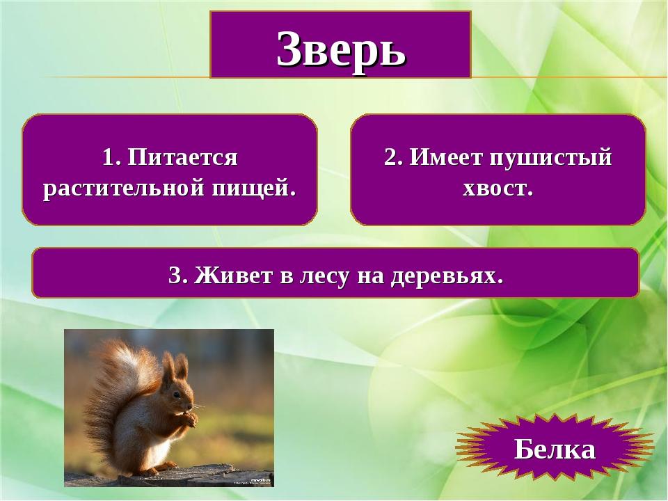1. Питается растительной пищей. 2. Имеет пушистый хвост. 3. Живет в лесу на д...