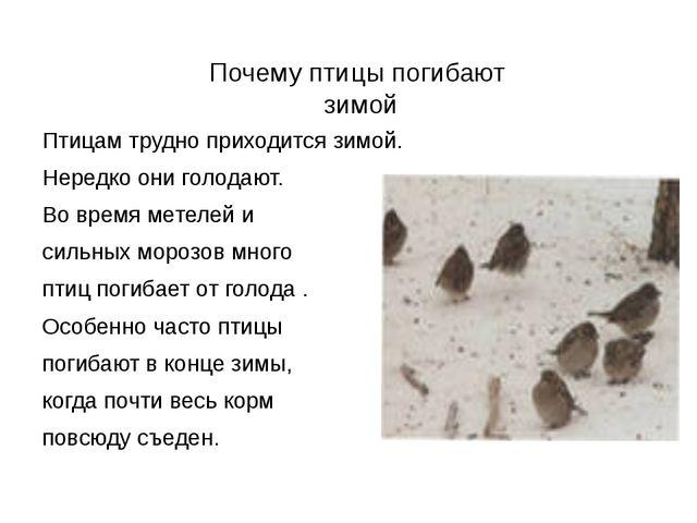 Почему птицы погибают  зимой Птицам трудно приходится зимой.  Нередко они г...