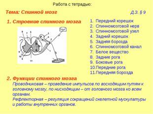 Тема: Спинной мозг  Д.З. § 9 Работа с тетрадью: Строение спинного мозга
