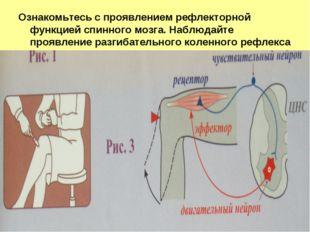 Ознакомьтесь с проявлением рефлекторной функцией спинного мозга. Наблюдайте п