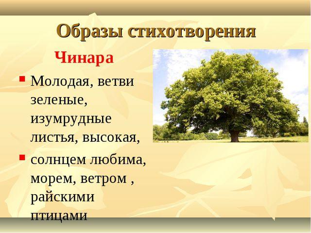 Образы стихотворения Чинара Молодая, ветви зеленые, изумрудные листья, высока...