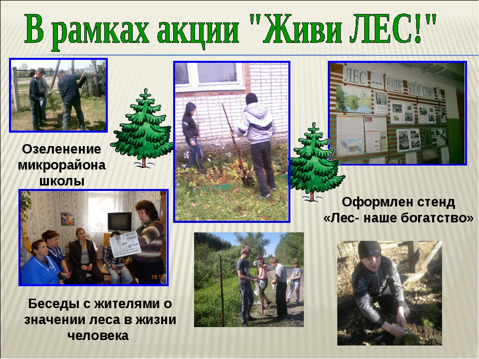 Беседы с жителями о значении леса в жизни человека Оформлен стенд «Лес- наше...