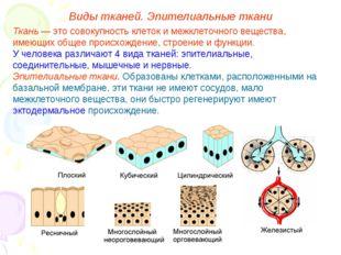 Виды тканей. Эпителиальные ткани Ткань — это совокупность клеток и межклеточн