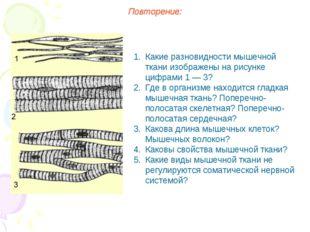 Повторение: Какие разновидности мышечной ткани изображены на рисунке цифрами