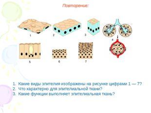 Повторение: Какие виды эпителия изображены на рисунке цифрами 1 — 7? Что хара