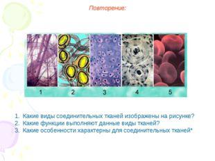 Повторение: Какие виды соединительных тканей изображены на рисунке? Какие фун