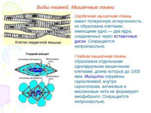 Виды тканей. Мышечные ткани Сердечная мышечная ткань имеет поперечную исчерче