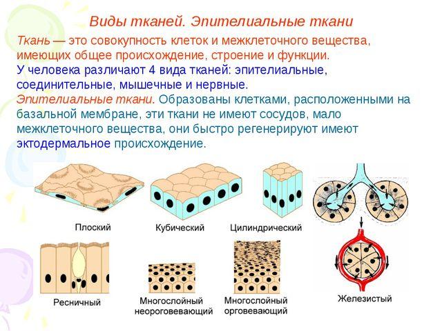 Виды тканей. Эпителиальные ткани Ткань — это совокупность клеток и межклеточн...