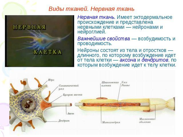 Виды тканей. Нервная ткань Нервная ткань. Имеет эктодермальное происхождение...