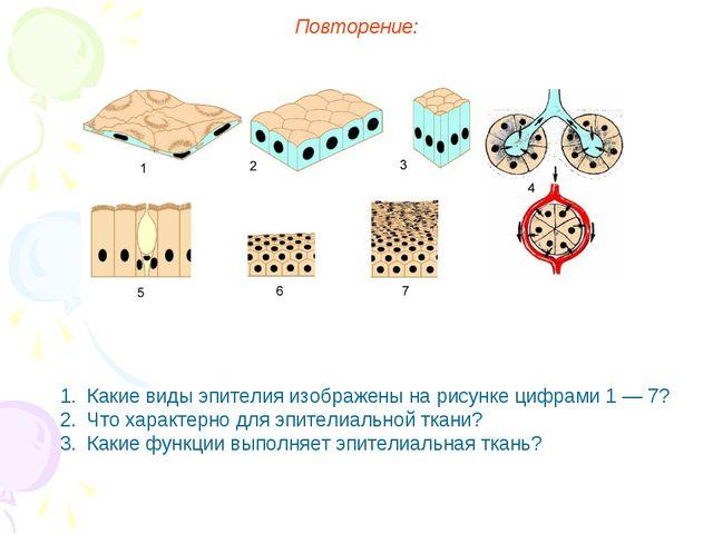 Повторение: Какие виды эпителия изображены на рисунке цифрами 1 — 7? Что хара...