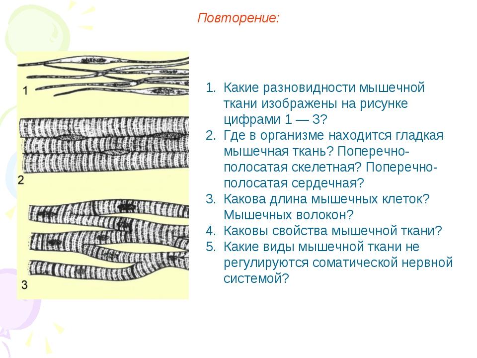 Повторение: Какие разновидности мышечной ткани изображены на рисунке цифрами...