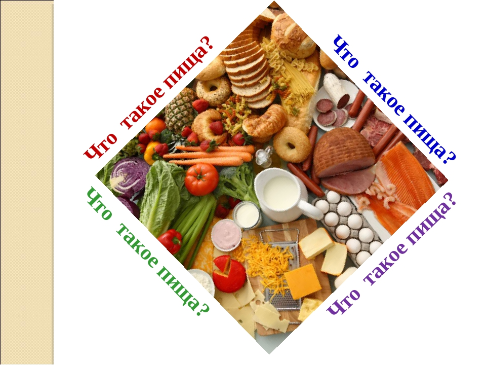Что такое пища? Что такое пища? Что такое пища? Что такое пища?
