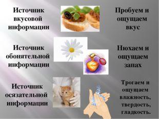 Источник вкусовой информации Пробуем и ощущаем вкус Источник обонятельной инф