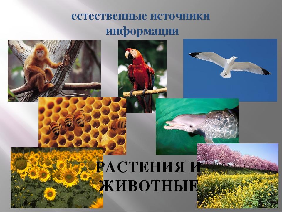 естественные источники информации РАСТЕНИЯ И ЖИВОТНЫЕ