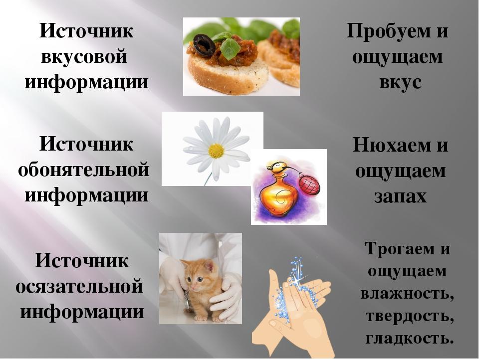 Источник вкусовой информации Пробуем и ощущаем вкус Источник обонятельной инф...