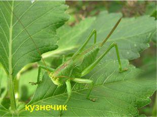 Это насекомое прославилось в одной песенке. Он был зелёным «…и ел одну лишь т
