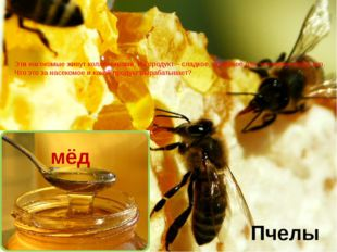 Эти насекомые живут коллективами. Их продукт – сладкое, полезное для человека