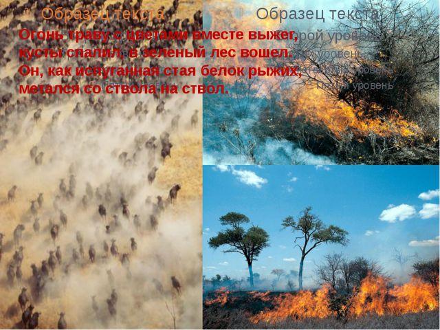 Огонь траву с цветами вместе выжег, кусты спалил, в зеленый лес вошел. Он, ка...